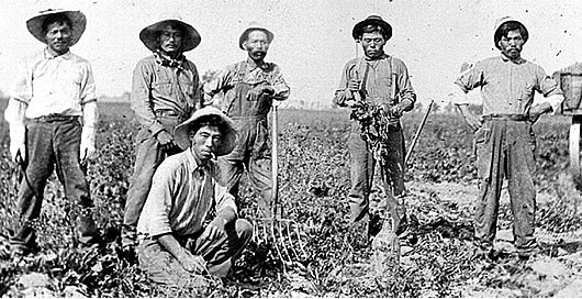 1903 Oxnard Beet Sows the Seeds of Diversity